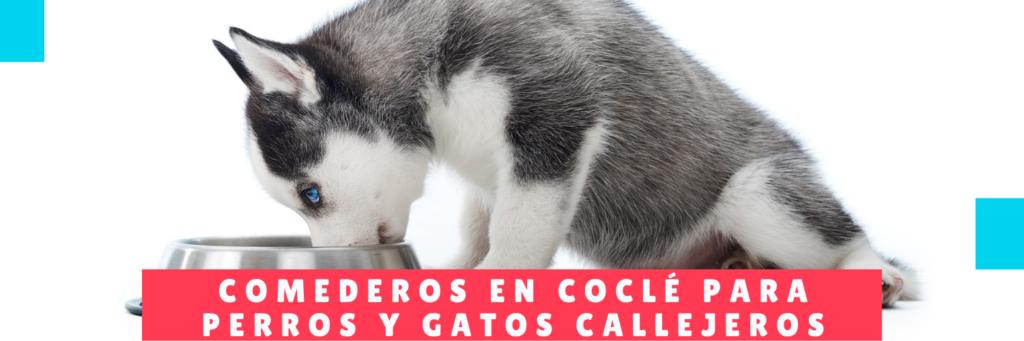 Comederos en Coclé para Perros y gatos callejeros - Noticias Perros - Hotel Mama Canino y Guarderia
