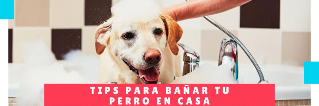 tips para bañar tu perro en casa - Hotel Mama Canino Panama - Hospedaje mascotas