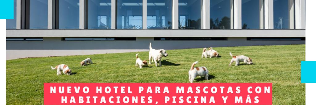 Nuevo hotel para mascotas con habitaciones, piscina y más - Hotel Mama Canino Panama - Guarderia canina