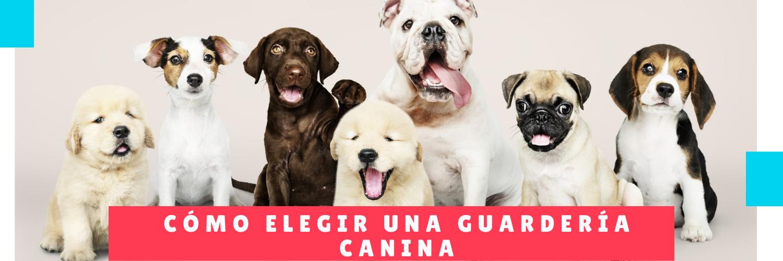 Cómo Elegir Una Guardería Canina - Hotel Mama Canino Panama - Mascotas y hotel