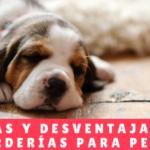 Ventajas y desventajas de las guarderías para perros - Hotel Mama Canino Panama - Hospedaje Perros