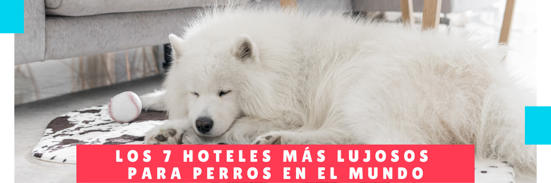 7 Hoteles más Lujosos para Perros en el Mundo - Hotel Para Perro Panama - Canino