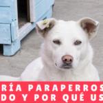 Guardería para perros cuál, cuándo y por qué usarla - Hotel Perros Panama - Mamá Canino